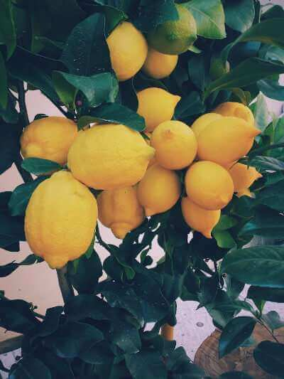 Beautiful lemons.