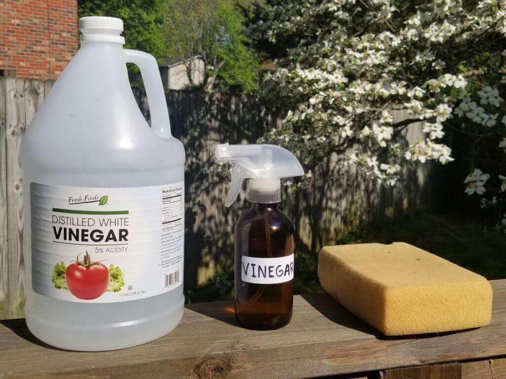 Vinegar and Sponge